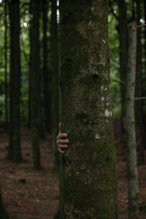 Photos gratuites de aboiement, arbres, arrière-plan flou, bois