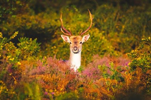 #wildlife, #性質, #鹿, #鹿角 的 免費圖庫相片
