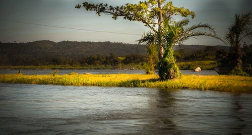アフリカ, ウガンダ, ジンジャ, ナイル川の源の無料の写真素材