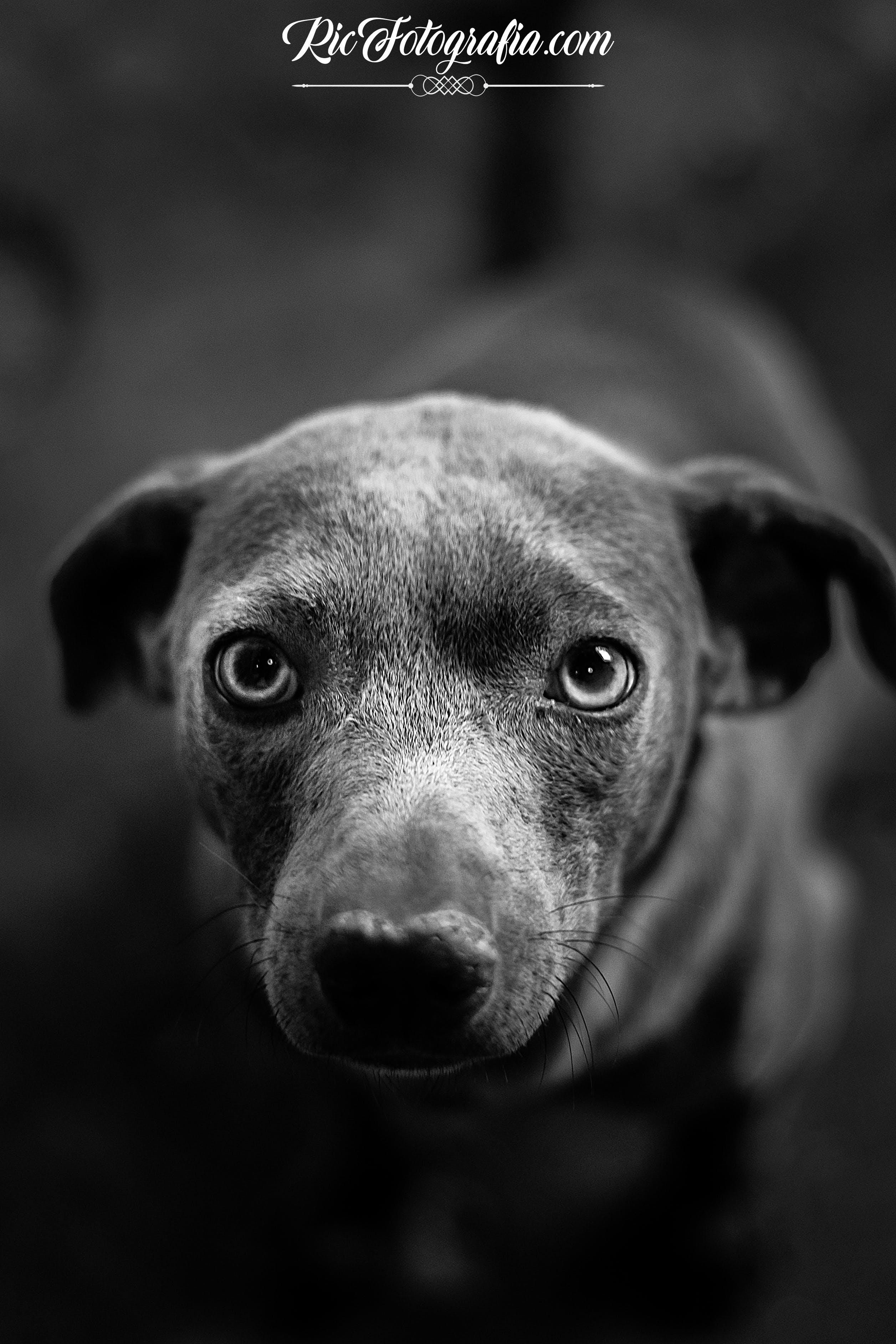 Kostenloses Stock Foto zu bild, hund, schwarz und weiß