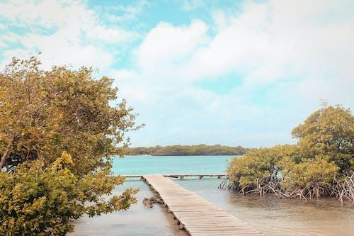 Foto profissional grátis de à beira-mar, azul, céu, manglar