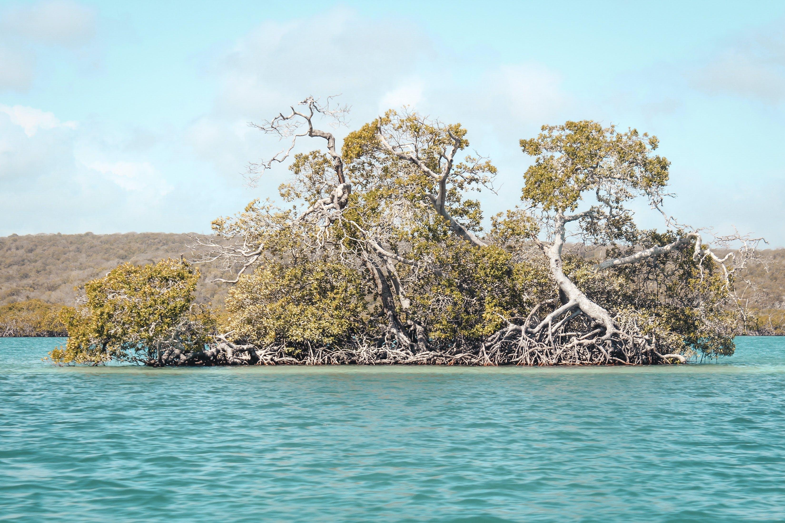 Free stock photo of beach, manglar, nature, oasis