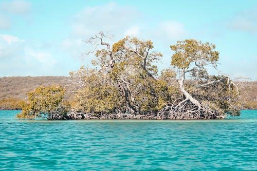 Foto profissional grátis de litoral, manglar, mar, natureza
