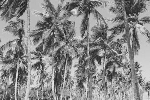 Foto profissional grátis de fundo preto, litoral, P&B, palmas