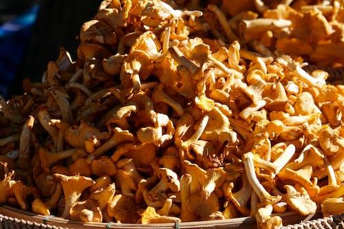Kostnadsfri bild av svampar