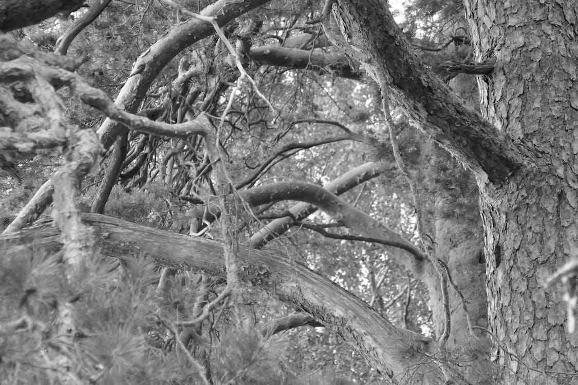 czarno-biały, drzewa, gałęzie