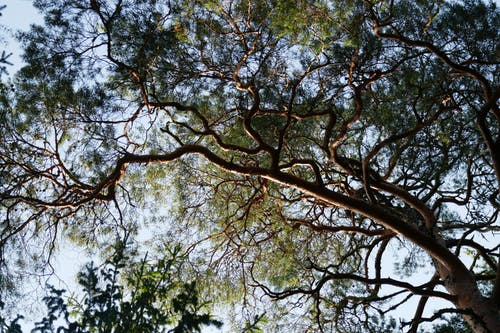 Free stock photo of branches, trees