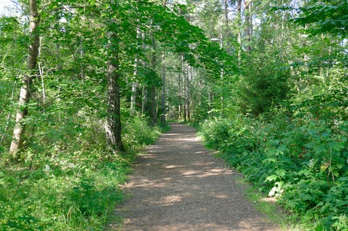 Free stock photo of forest, summer, trail