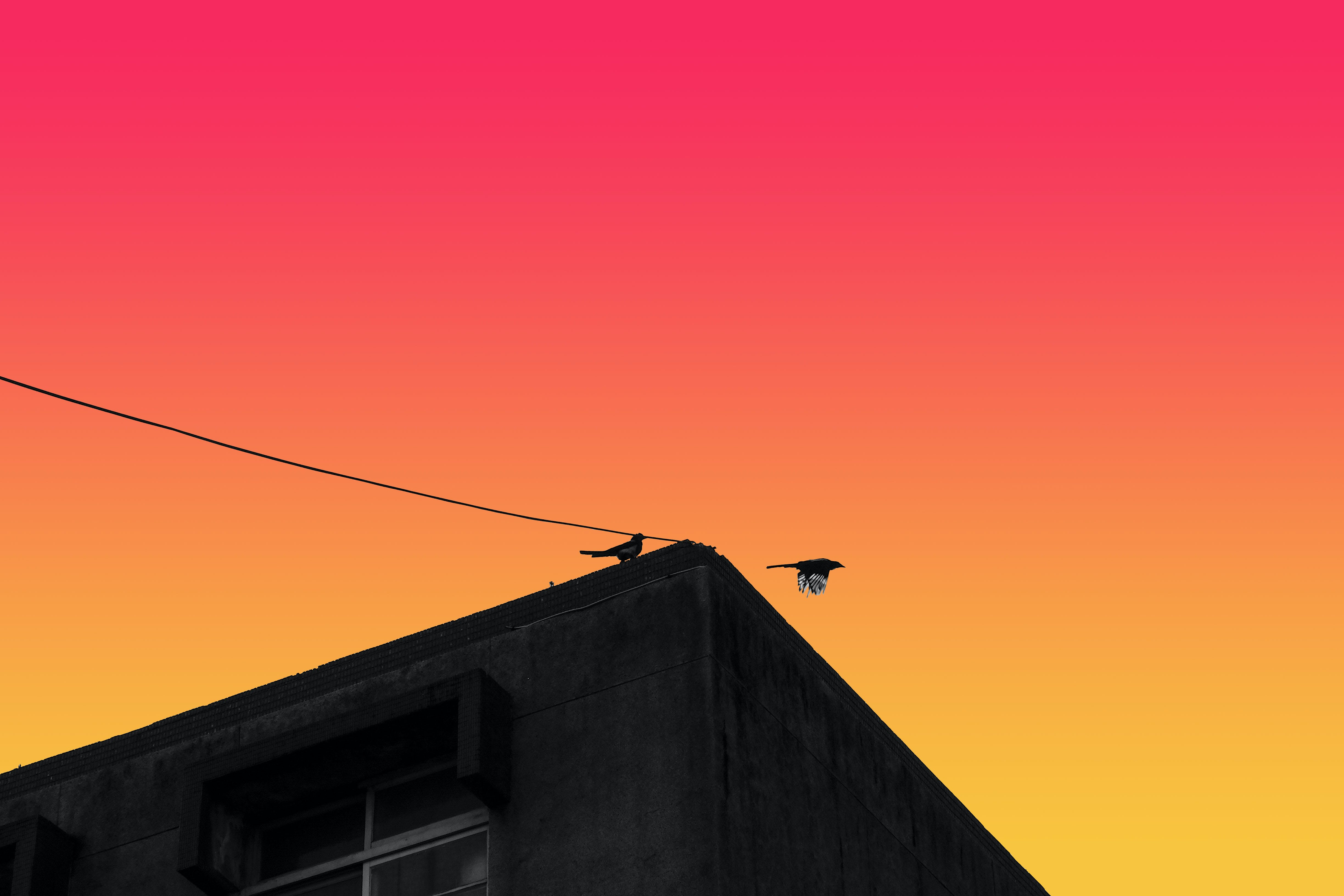 Low Angle and Silhouette Photography of Two Birds on Roof