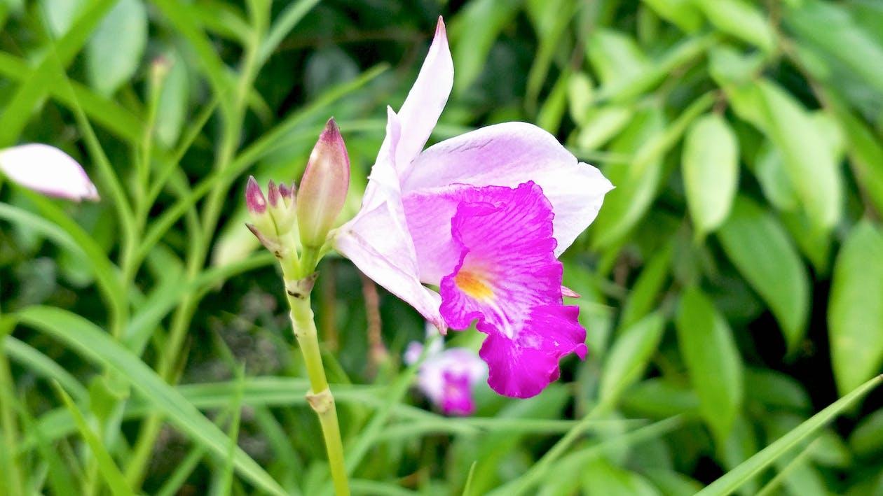 Free stock photo of Angiosperms, botanical gardens, flower