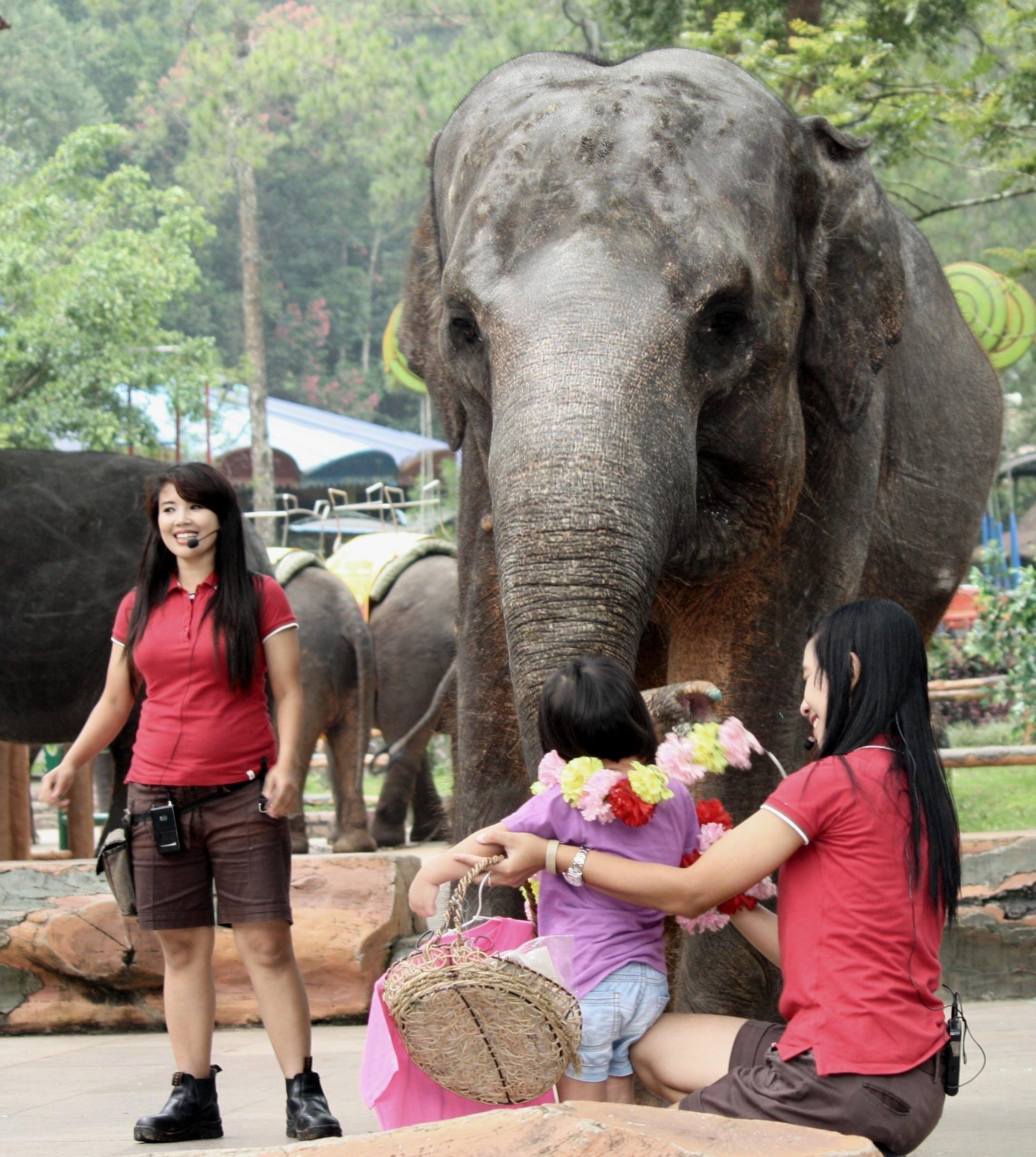 Foto d'estoc gratuïta de elefant, flor, joveneta, nena