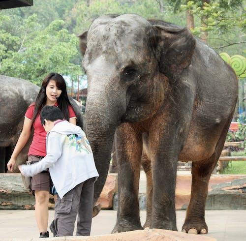 Kostenloses Stock Foto zu elefant, junges mädchen, kleiner junge