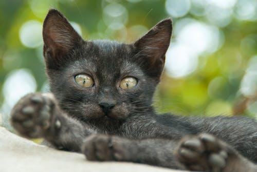 Foto d'estoc gratuïta de adorable, animal, bigotis, bokeh