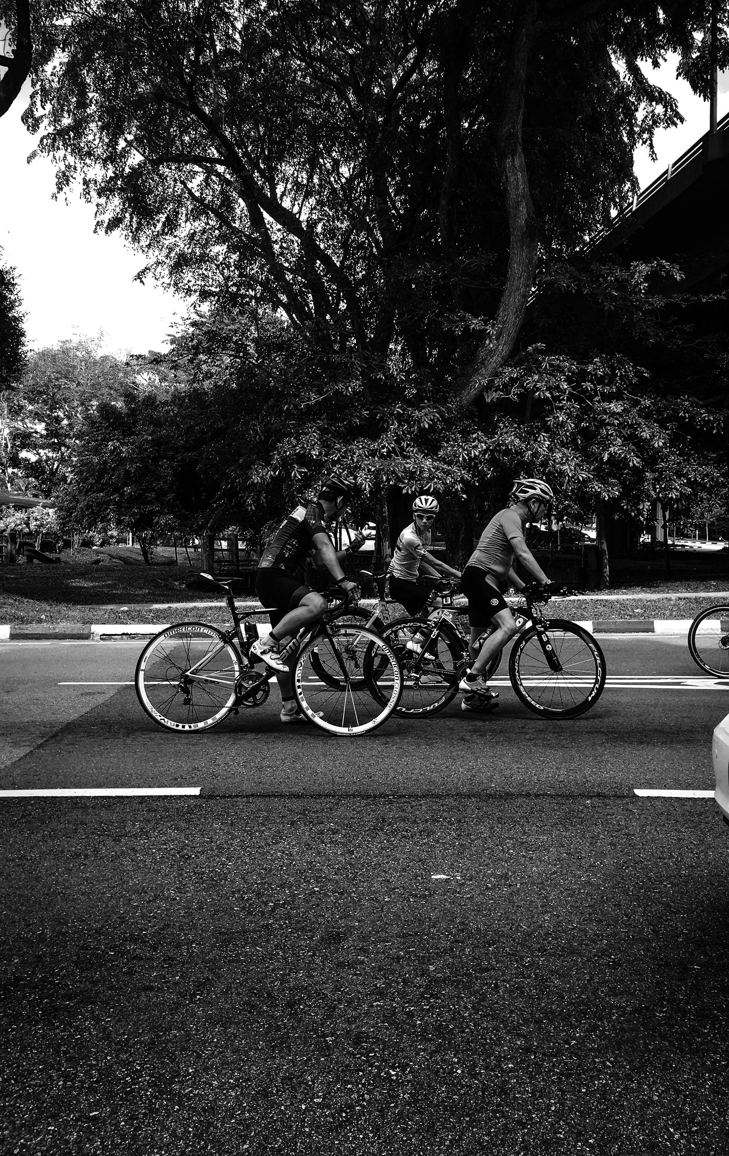 Základová fotografie zdarma na téma bikeři, černobílý, cyklisté, dopravní systém