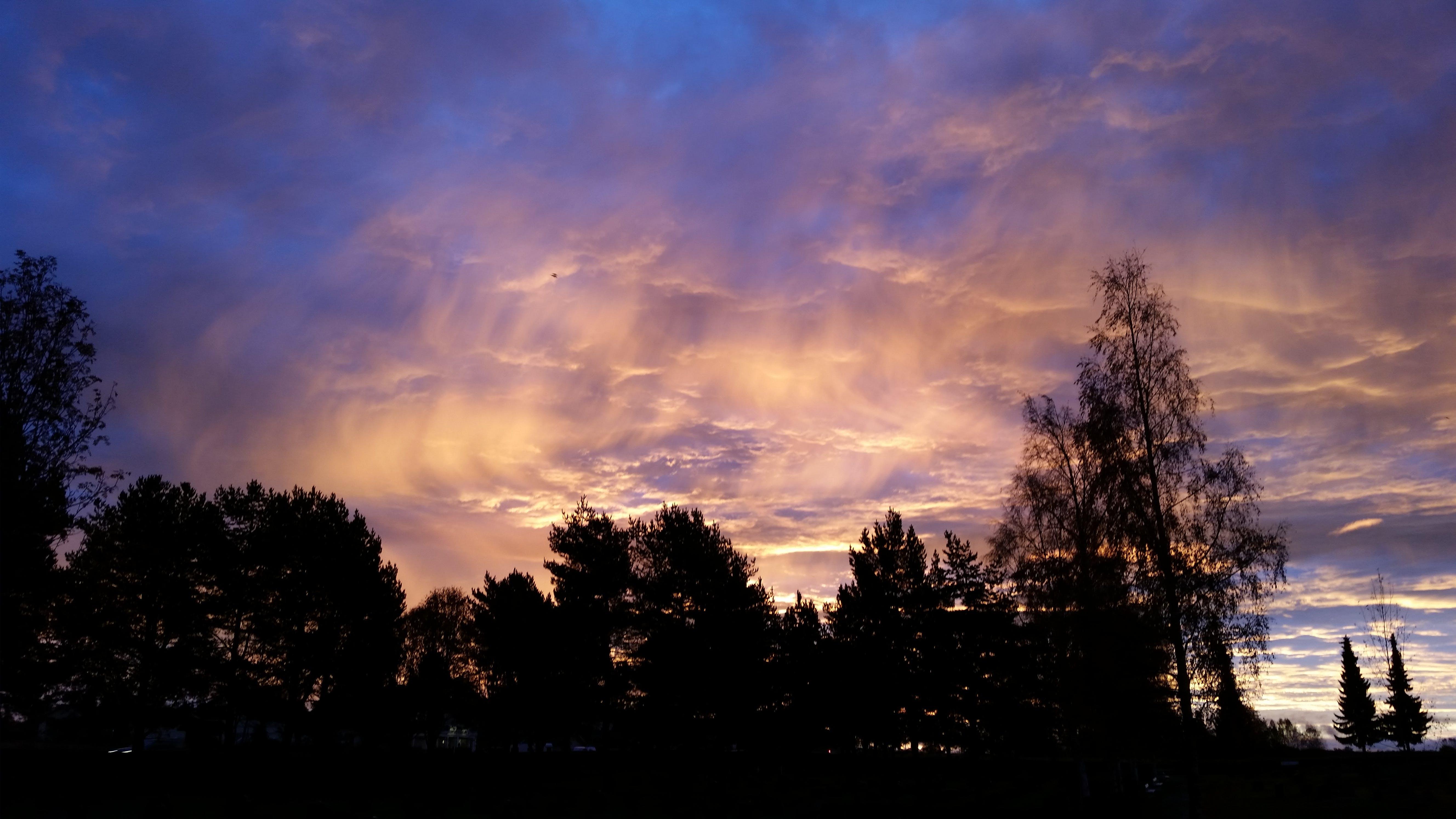 Foto d'estoc gratuïta de arbres, cels ennuvolats, colorit, ennuvolat