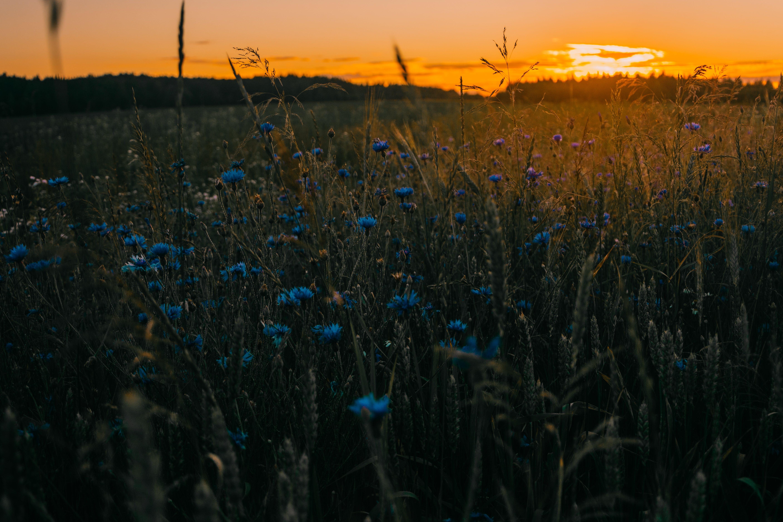 Základová fotografie zdarma na téma barvy, fialové květiny, hřiště, krajina