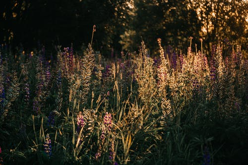 Fotobanka sbezplatnými fotkami na tému farby, flóra, jasný, krajina