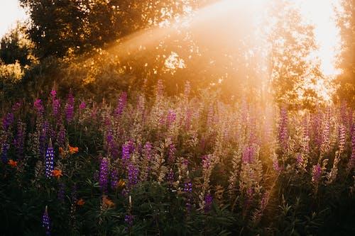 Foto d'estoc gratuïta de alba, bonic, delicat, flora