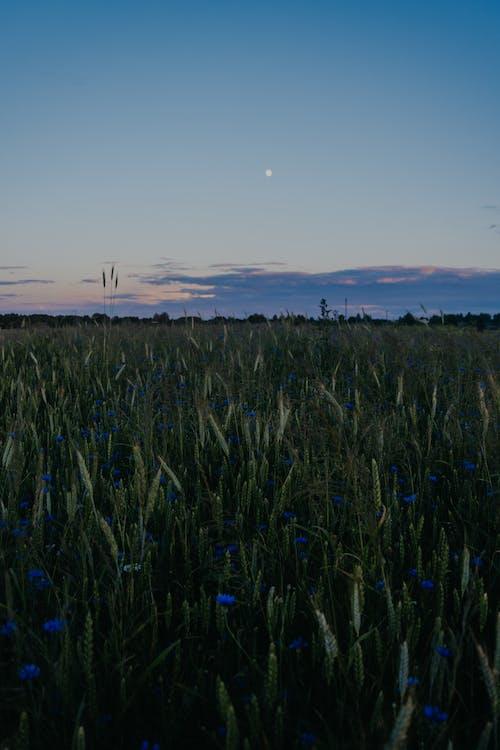 Foto stok gratis awan, bagus, bersuasana petang, bidang