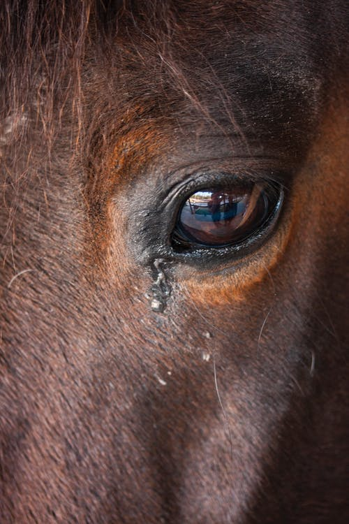 Free stock photo of animal, animal eye, animal head, animal themes