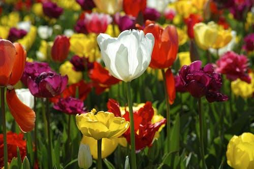 Free stock photo of backgrounds, beautiful, beauty, botanic