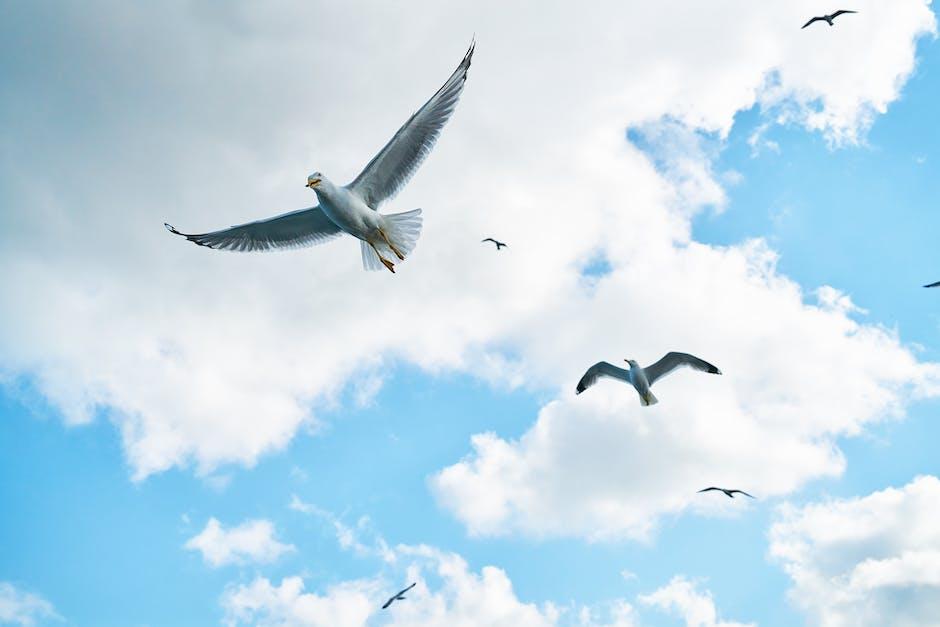 Several soaring seagulls