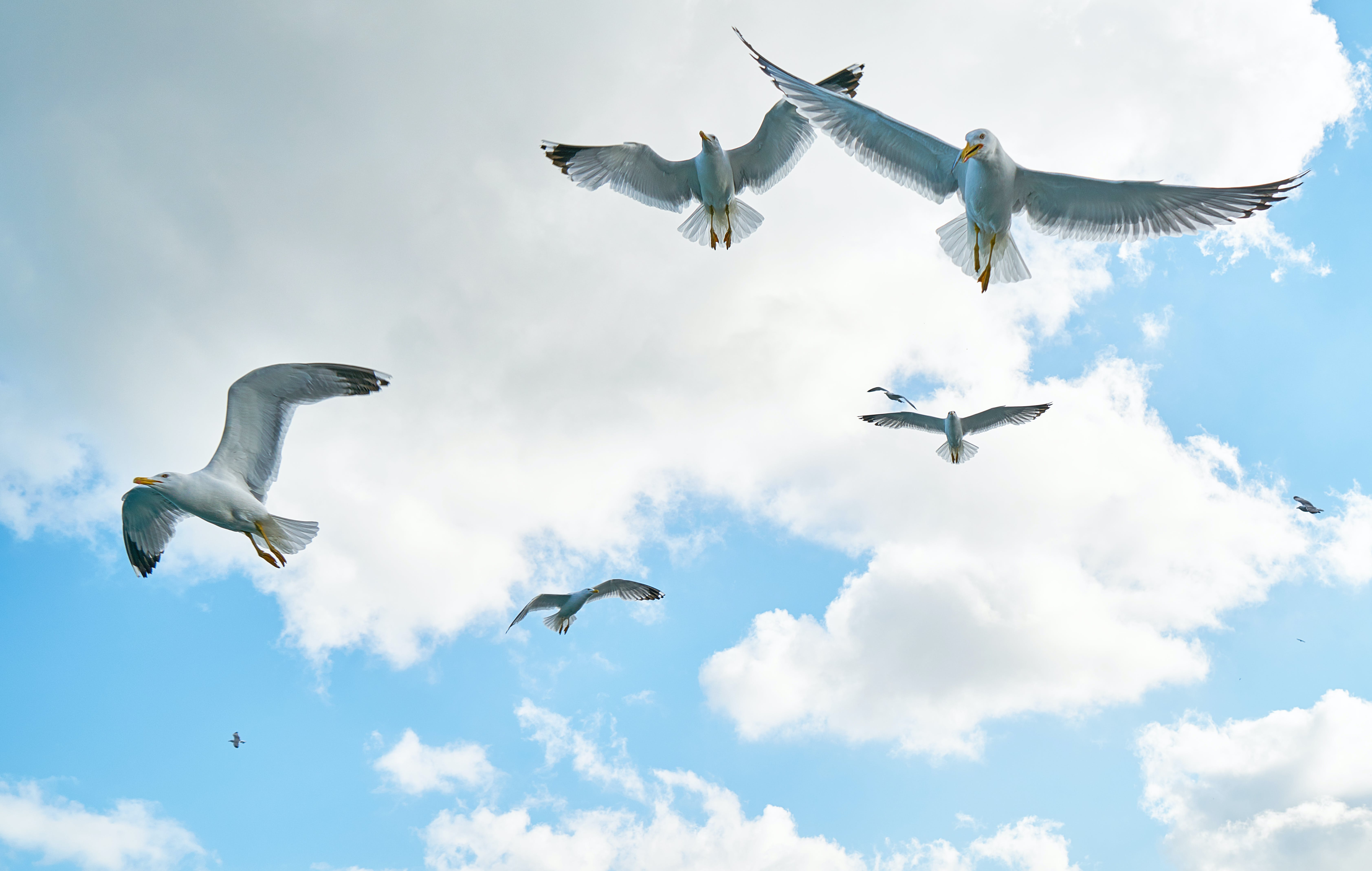 Low Angle Photography of Flock of Flying Gulls