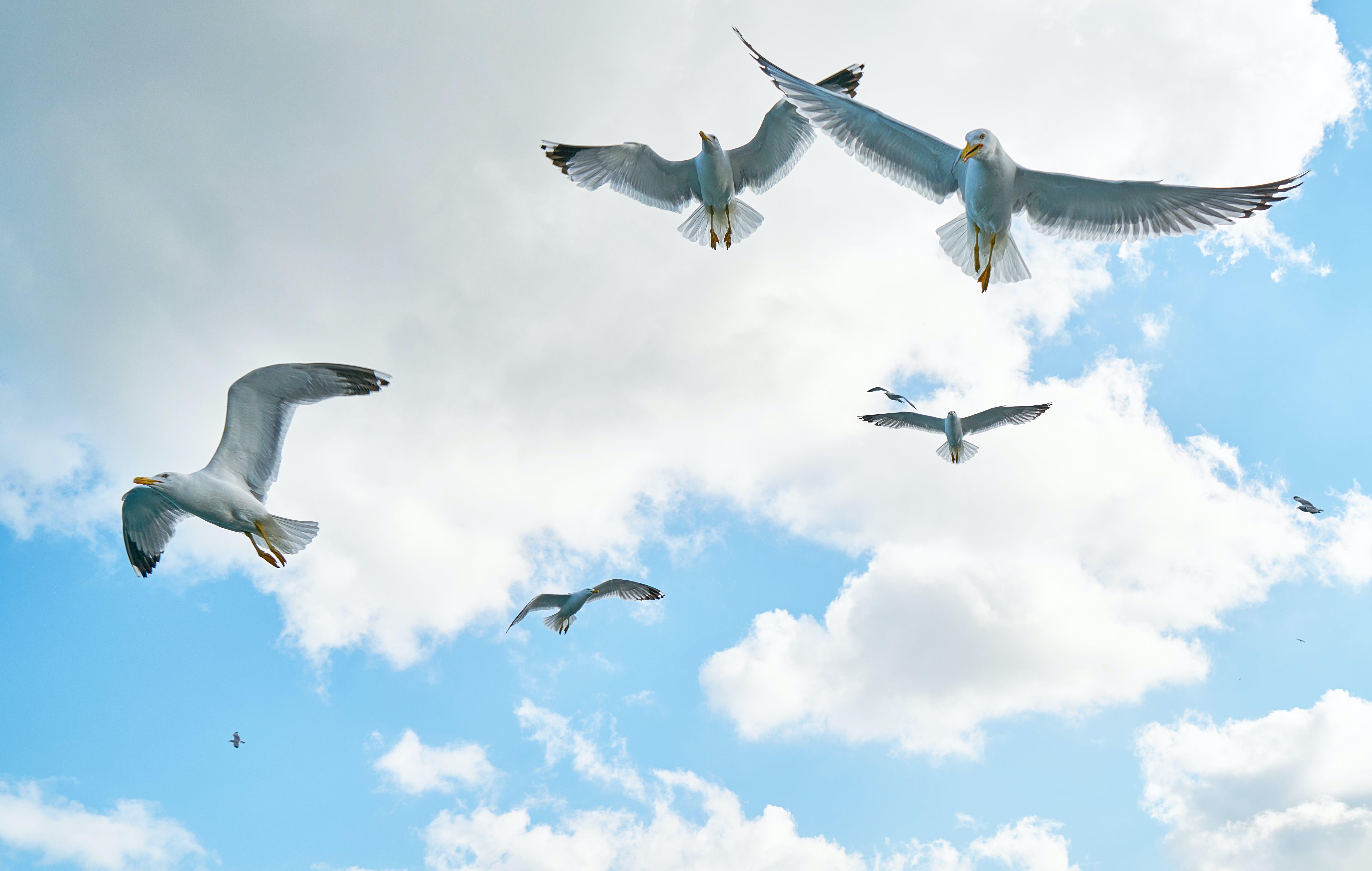 きらきら, カモメ, 急上昇, 羽毛の無料の写真素材