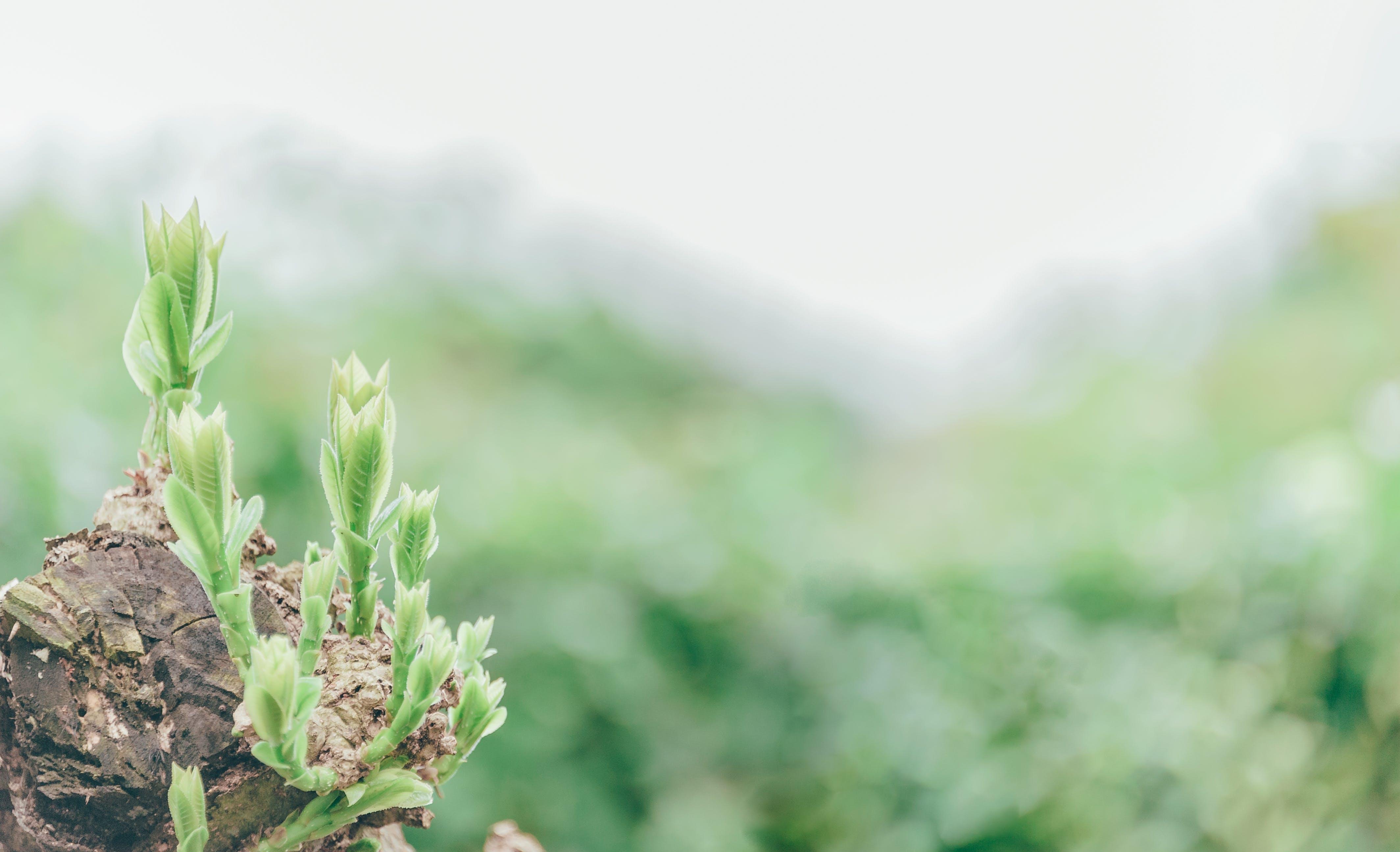 ぼかし, ファーム, フローラ, 夏の無料の写真素材