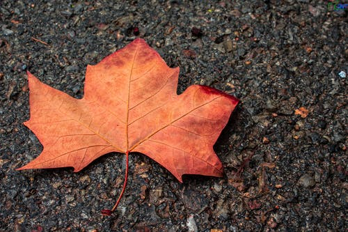 Free stock photo of canada, follow me, like, natue