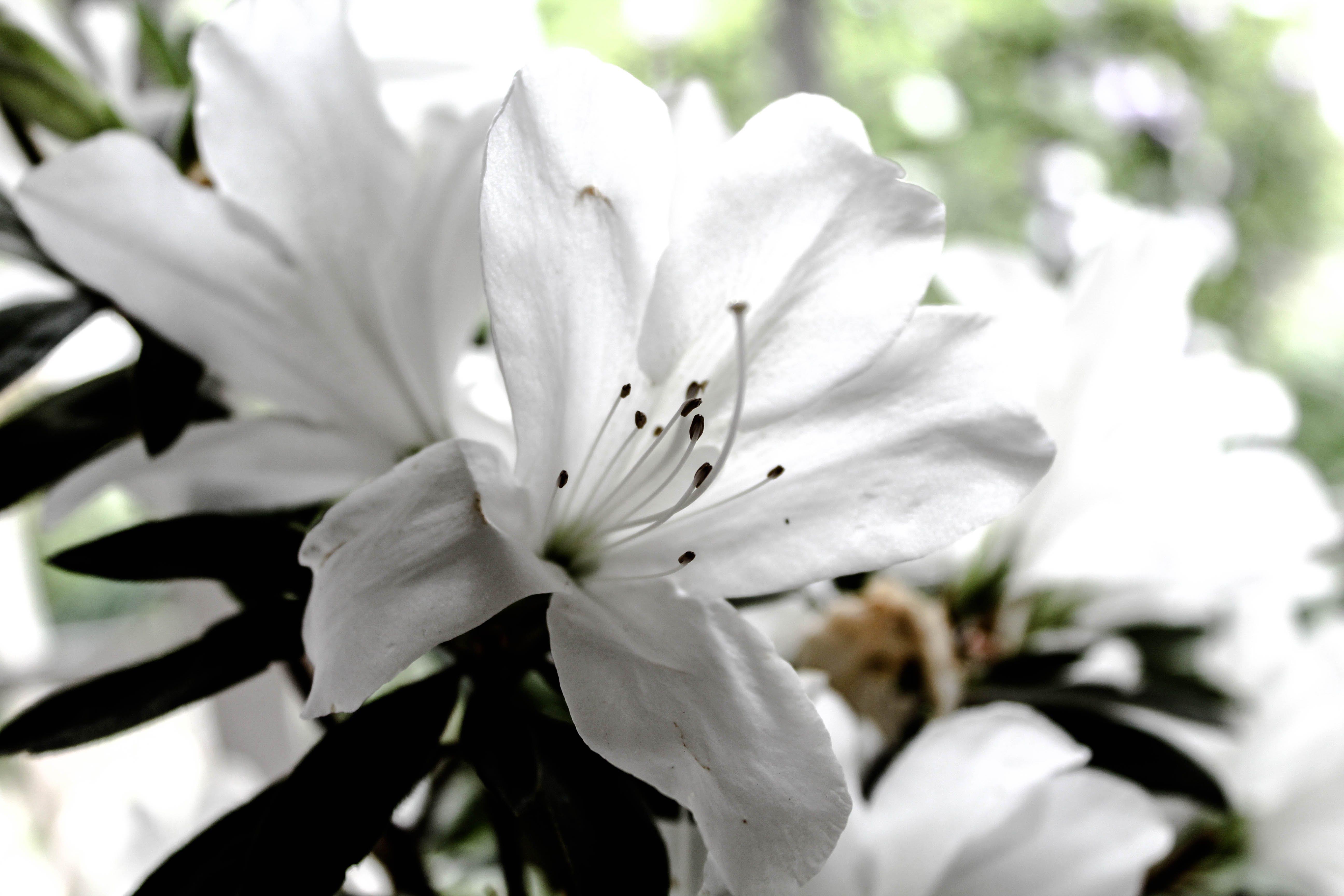 Foto profissional grátis de atraente, clareza, flor branca