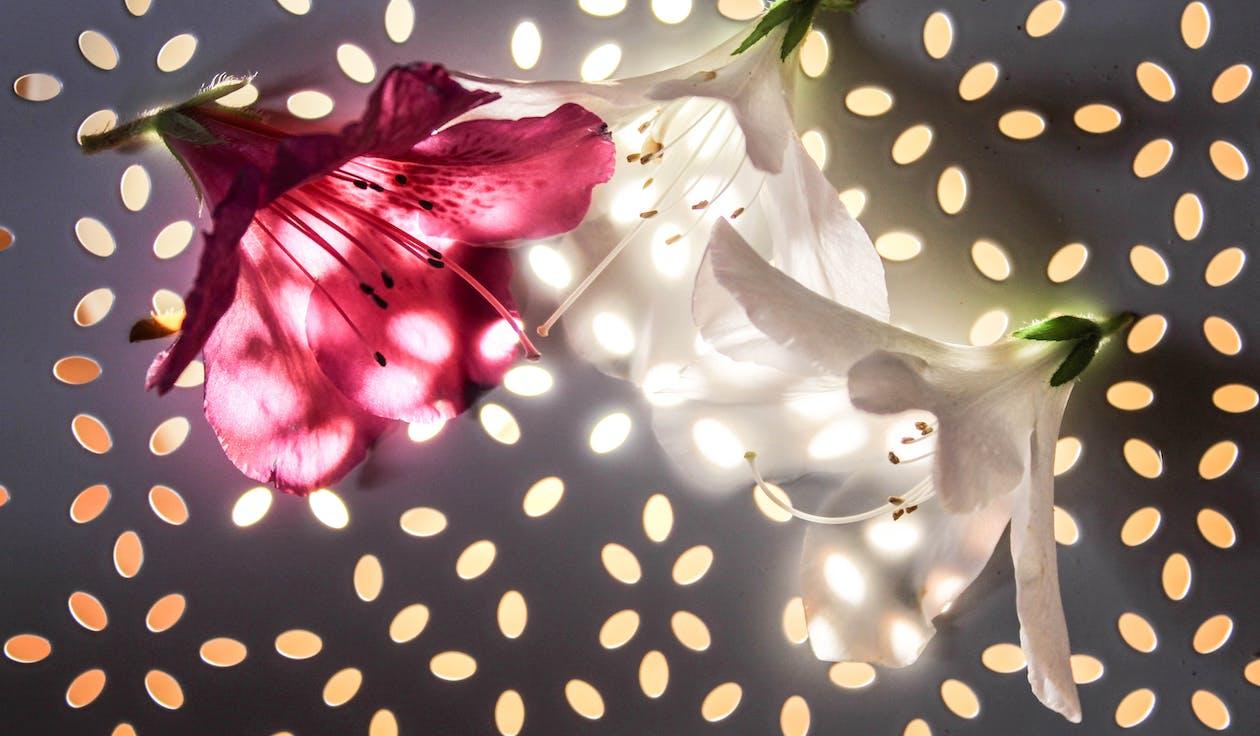 abstrakt baggrund, glødende, hvid blomst