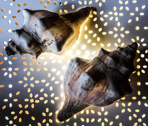 arka ışık, aydınlatma ekipmanı, deniz kabukları, derin okyanus içeren Ücretsiz stok fotoğraf