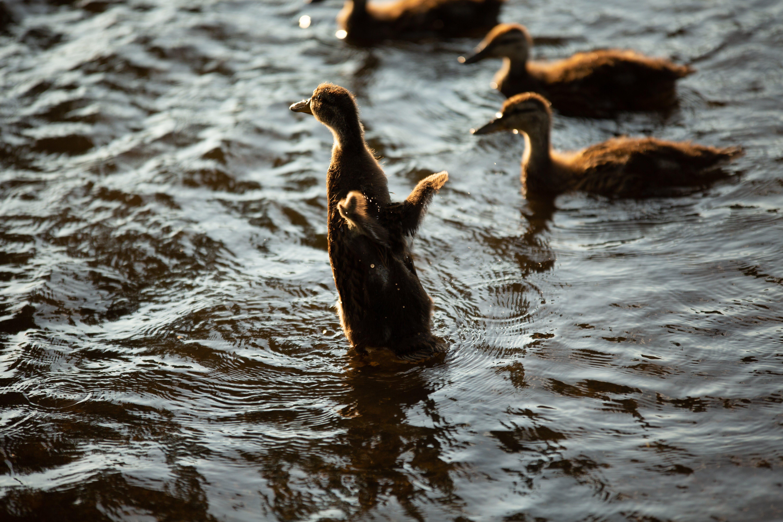 Immagine gratuita di acqua, ali, animale, bagnato