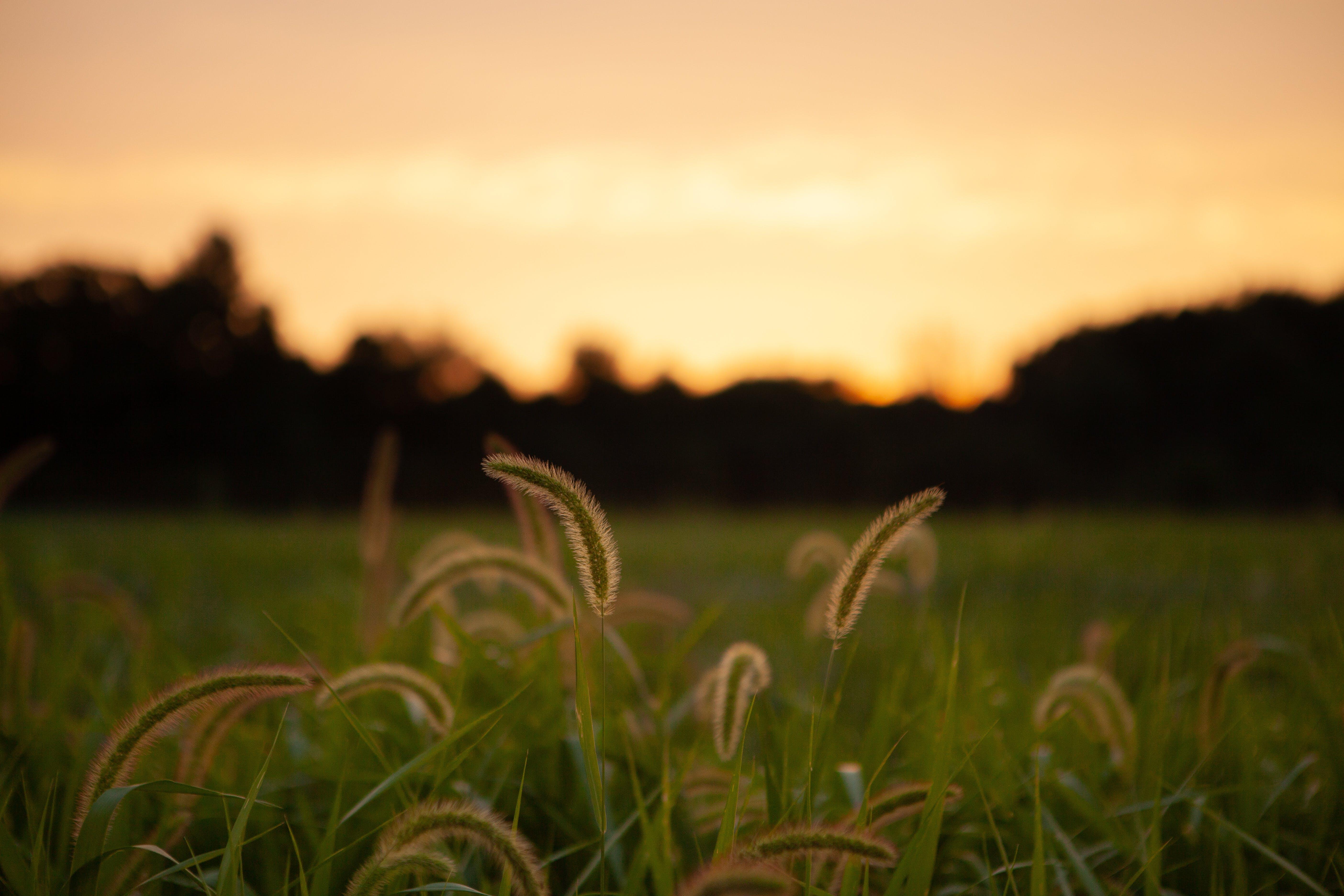 Immagine gratuita di alba, alberi, azienda agricola, campo