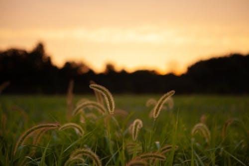 คลังภาพถ่ายฟรี ของ กลางแจ้ง, ซิลูเอตต์, ดวงอาทิตย์, ต้นไม้