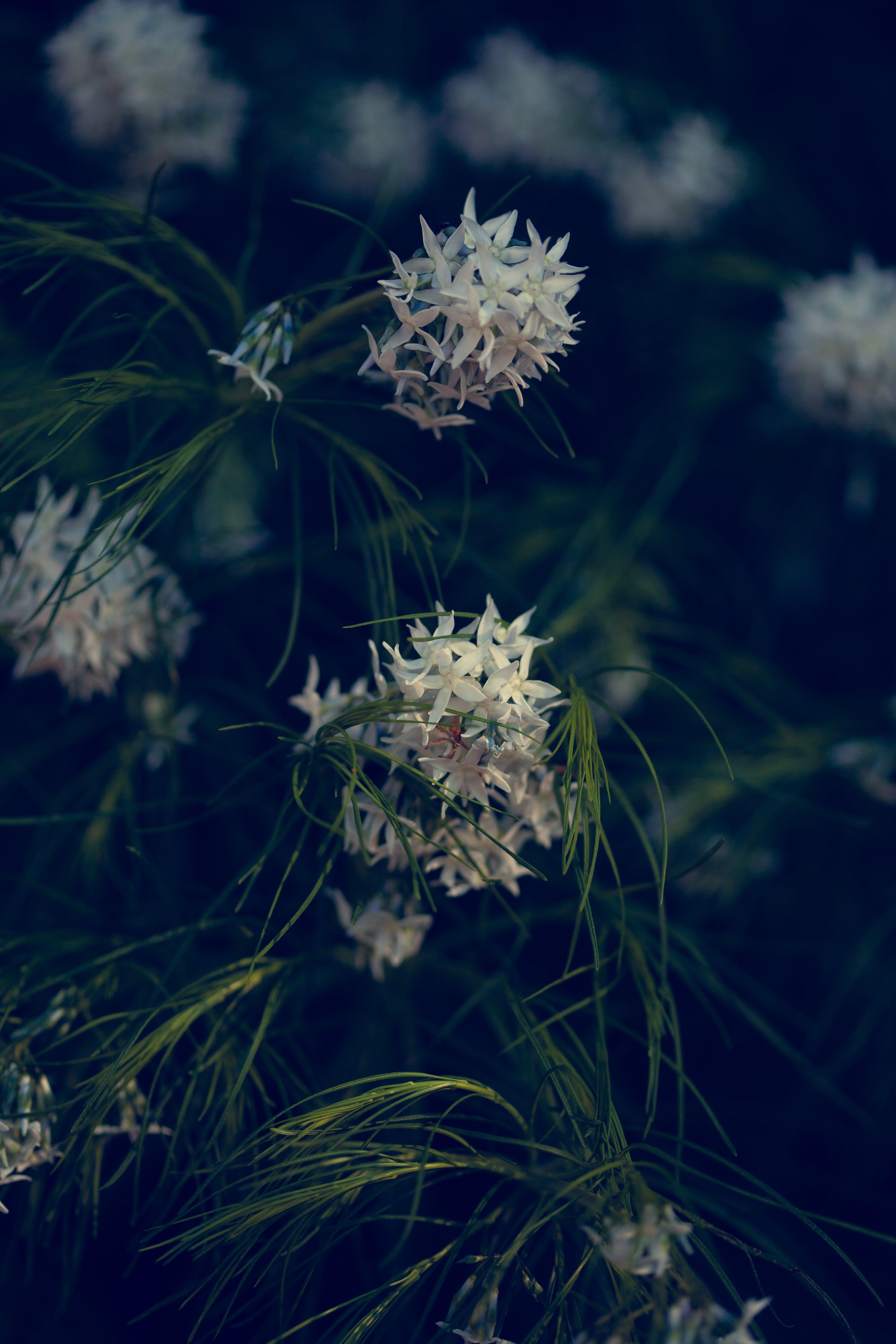 Immagine gratuita di azzurro, fiori, gree, morbido