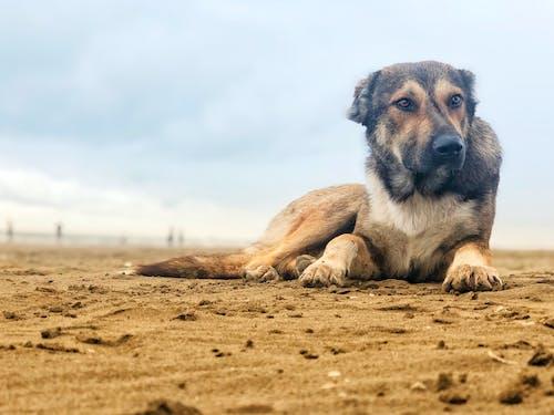 Základová fotografie zdarma na téma #dog, moře, psi, Severní moře