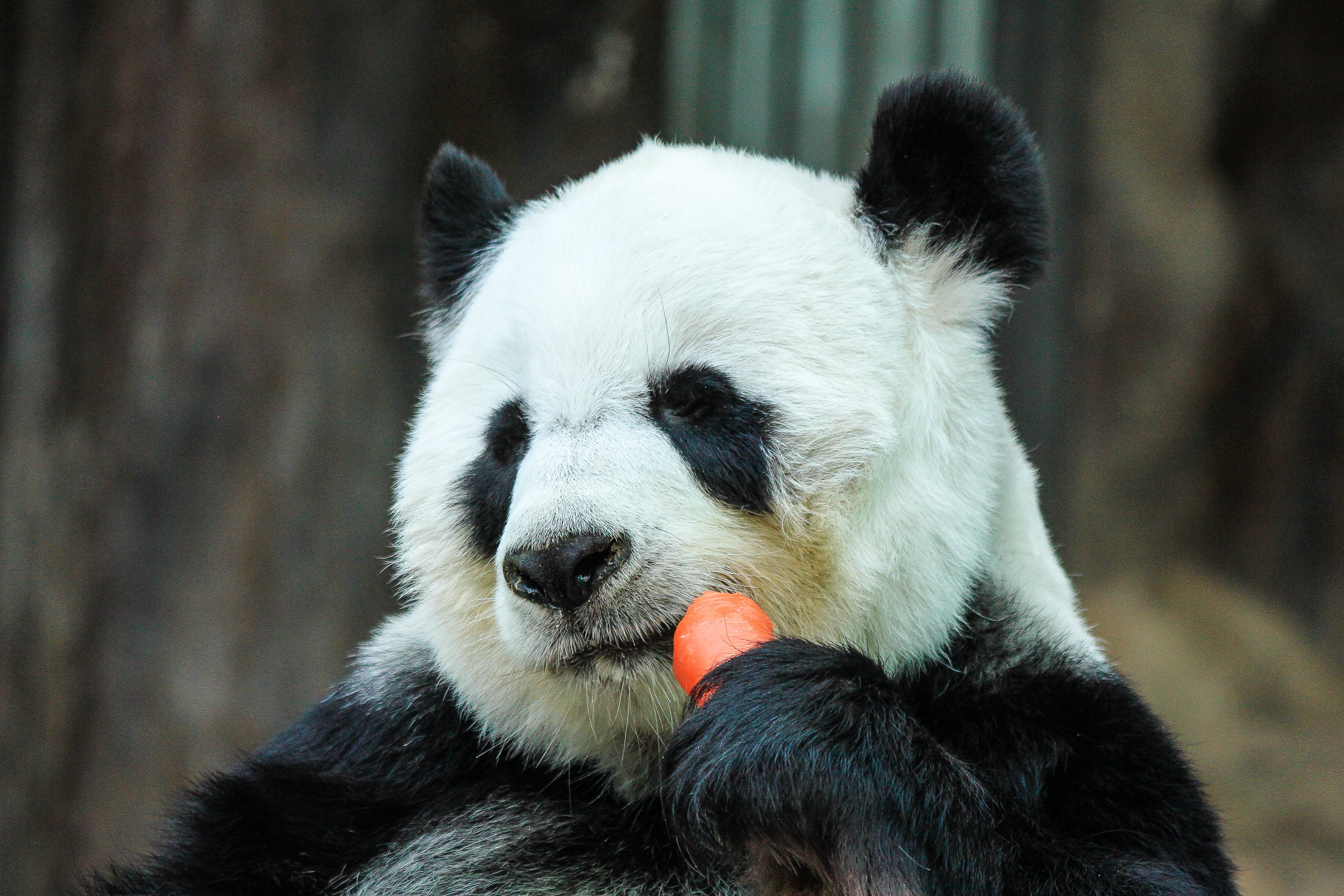 Free stock photo of animal, zoo, travel, eat