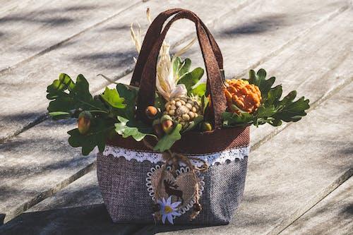 Gratis stockfoto met bloeiend, bloemen, close-up, daglicht