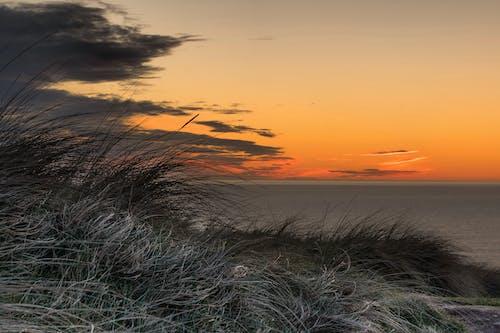 Free stock photo of grass, holiday, orange skies