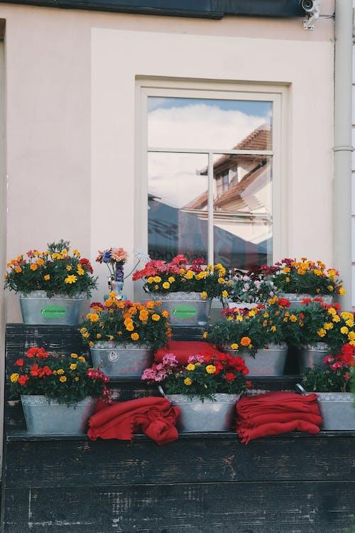 Gratis stockfoto met bloemen, bloempotten, daglicht, drinkglas