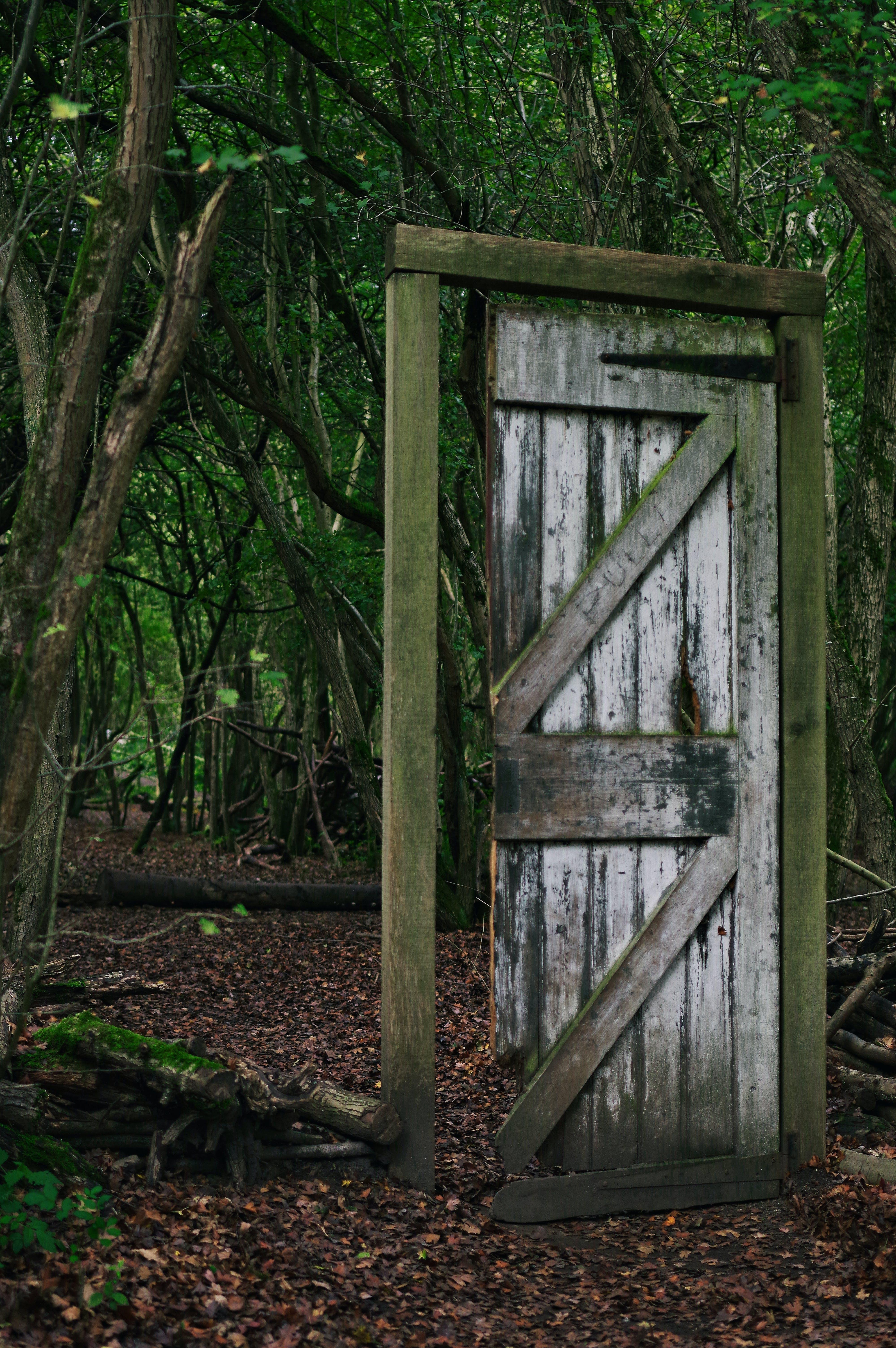 Foto d'estoc gratuïta de boscos, entarance, misteriós, porta