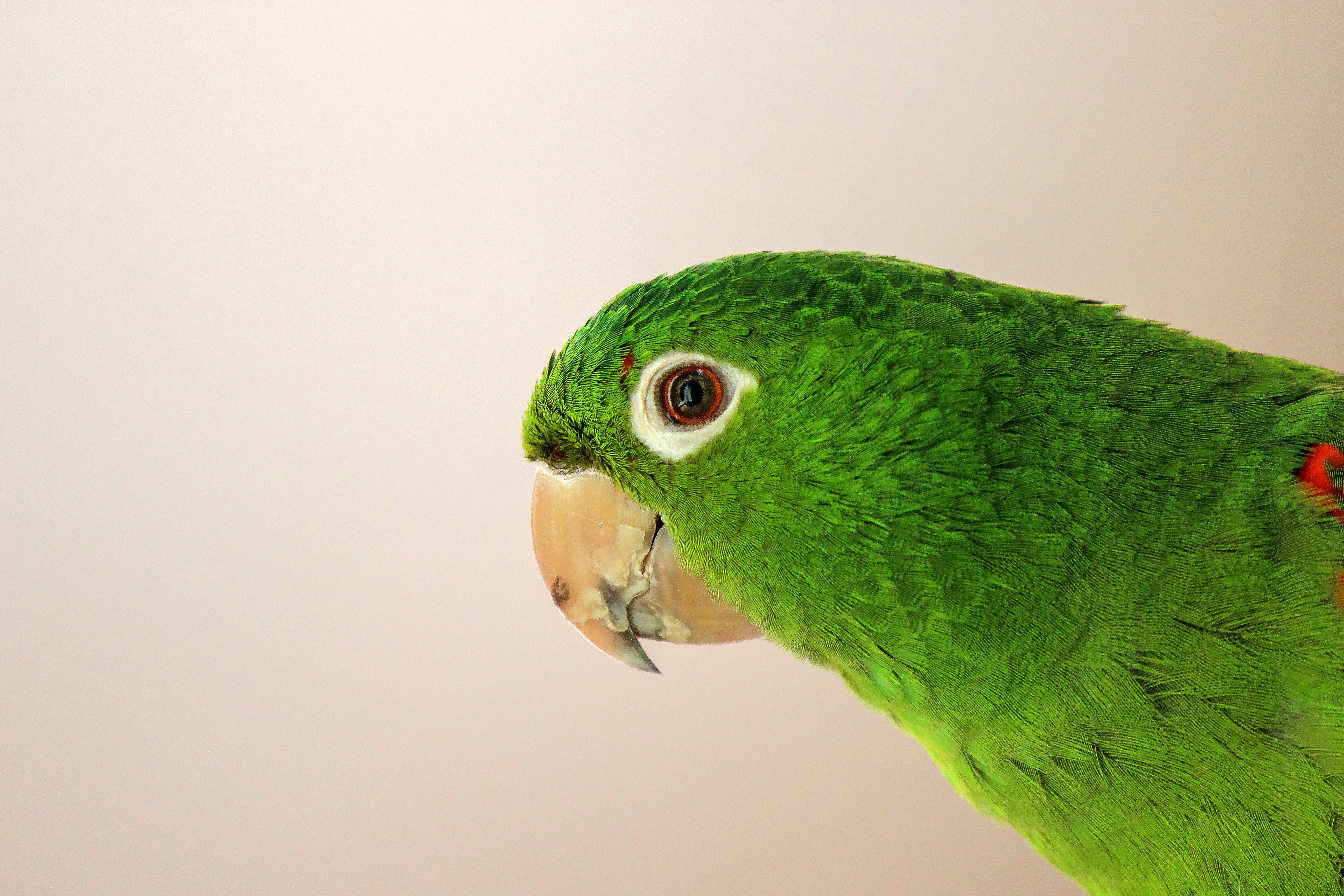 Close-up Photography of Green Parrot