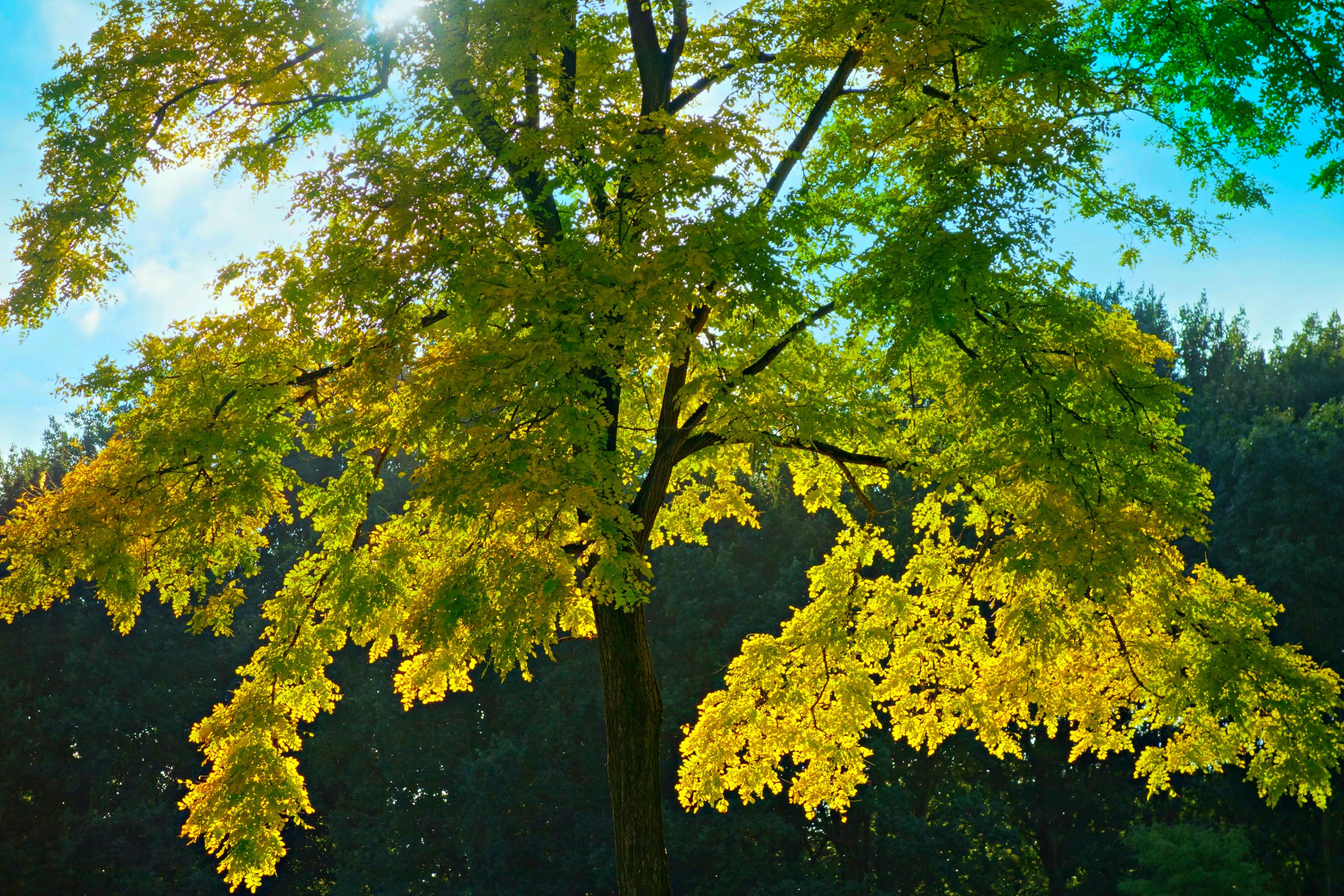 of autumn, back light, foliage, nature