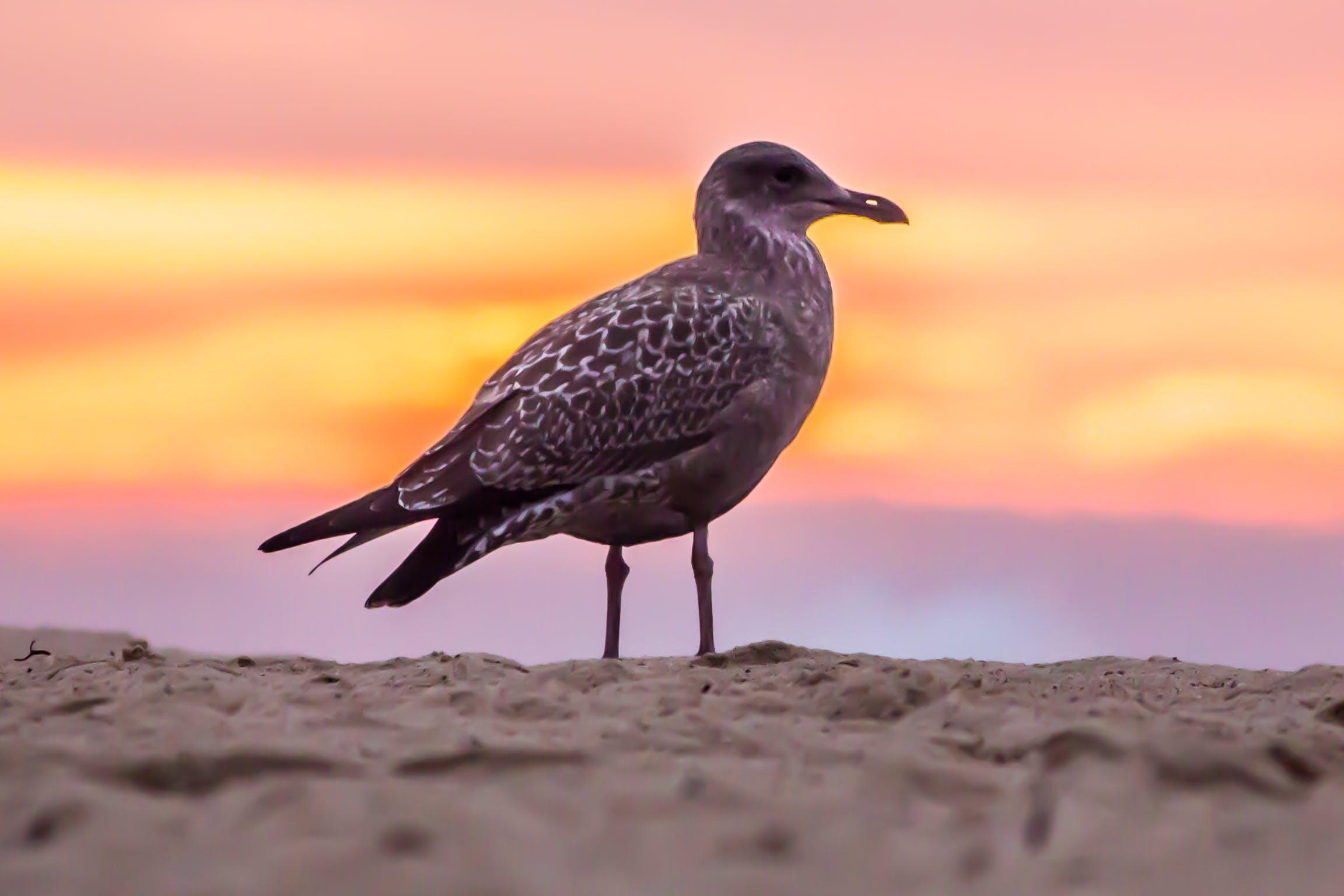 Grey Bird on White Beach Sand