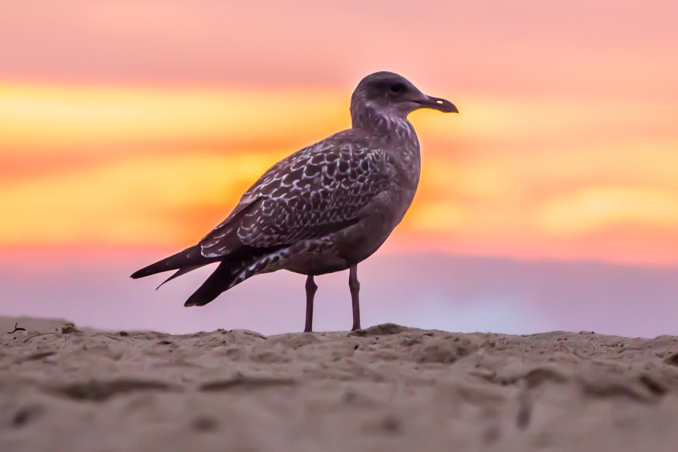 Grey Bird on White Beach Sand
