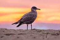 bird, beach, sand