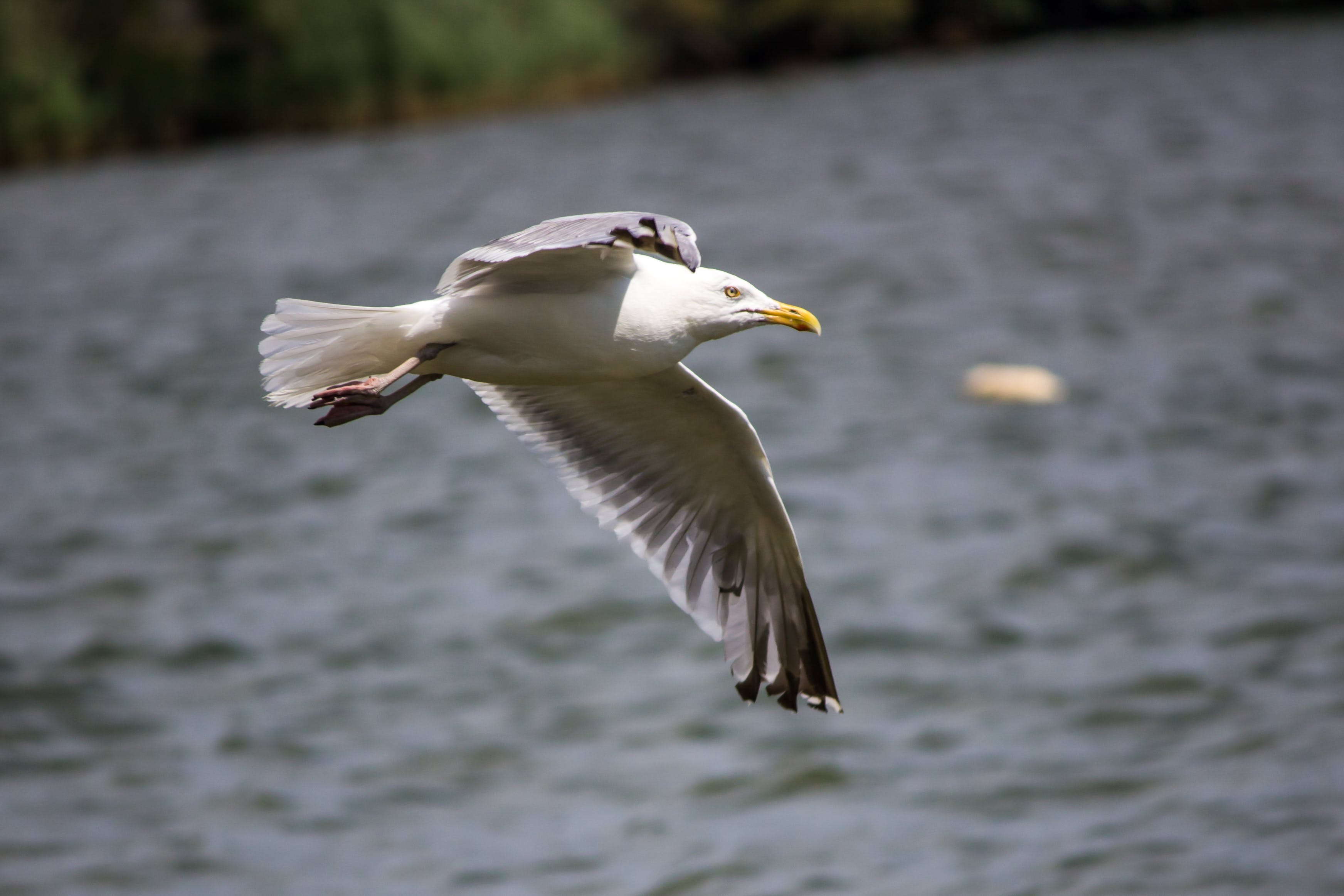 Seagull Flying Above the Sea during Day Time