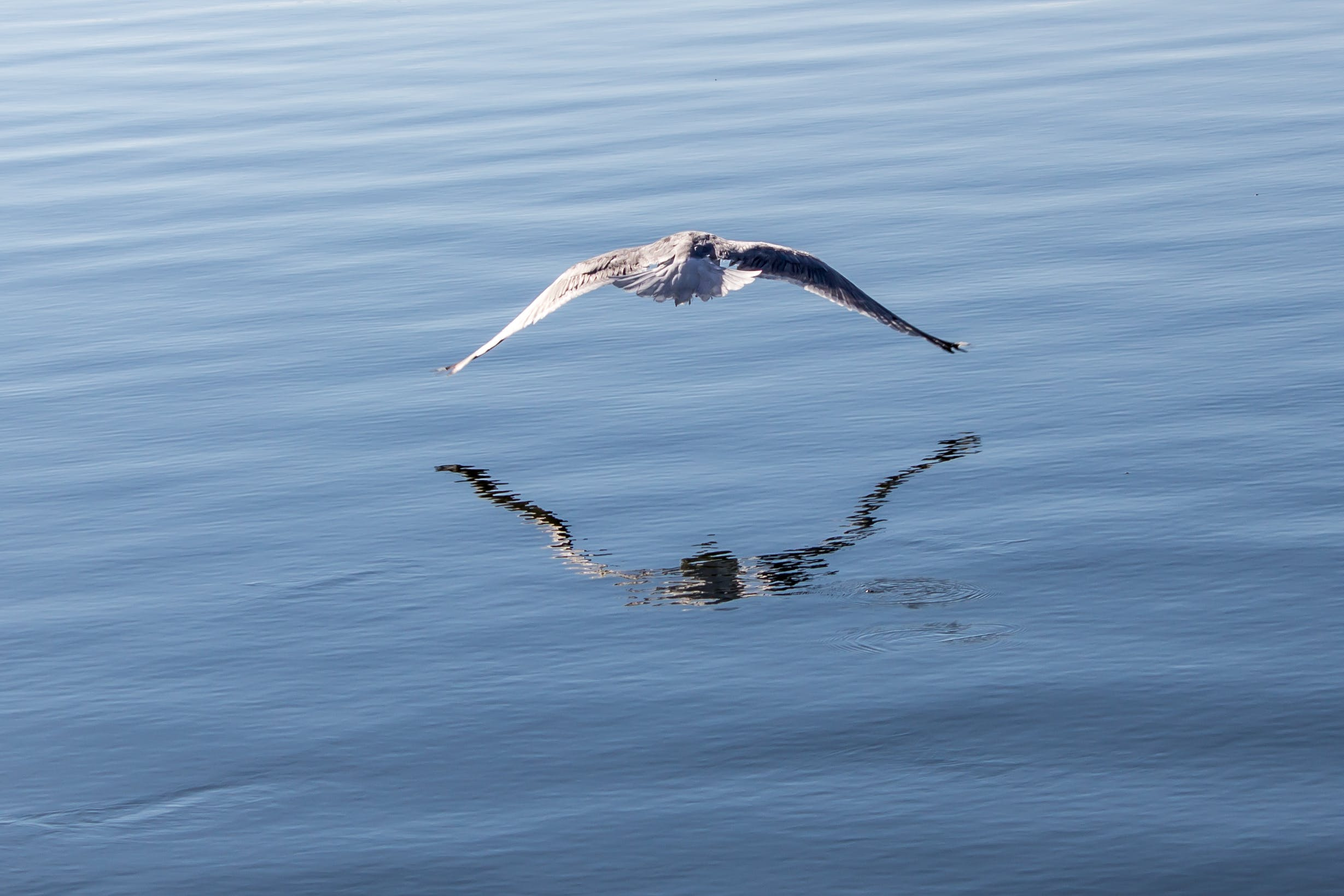 Free stock photo of seagull